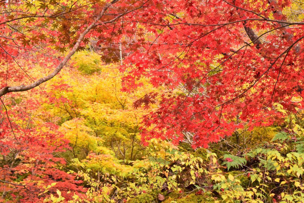 紅葉_みたらい渓谷